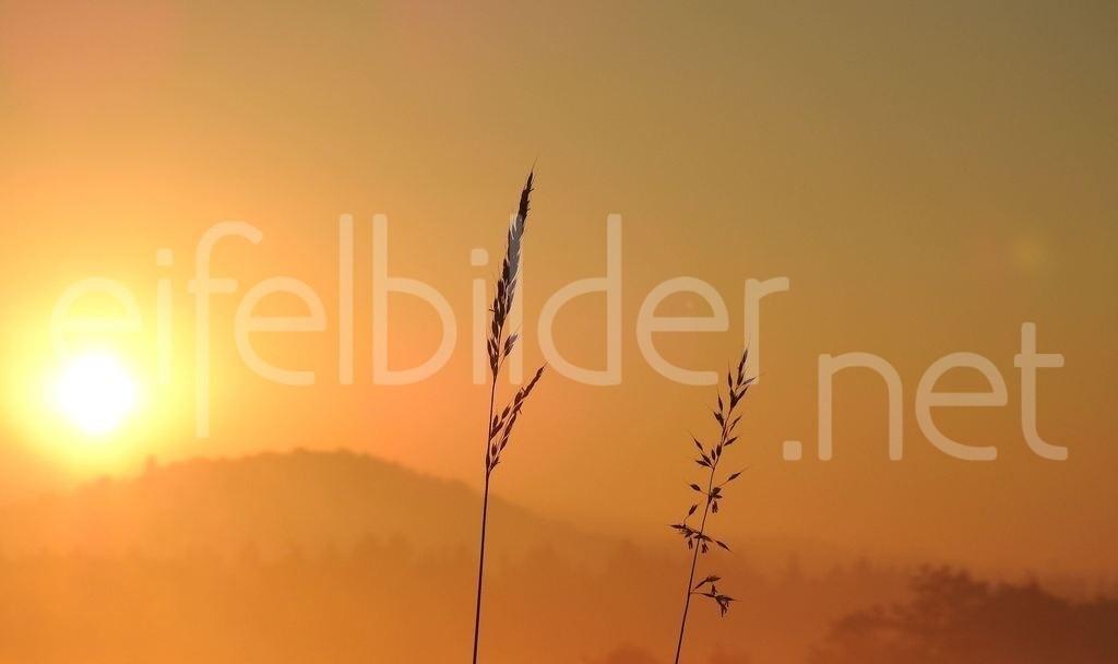 Sonnenaufgang bei Daun   Sonnenaufgang bei Daun in der Vulkaneifel