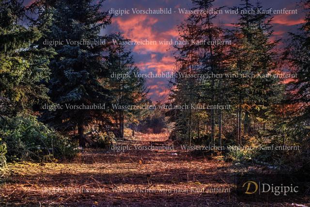 Märchenwald 1-Vorschaubild