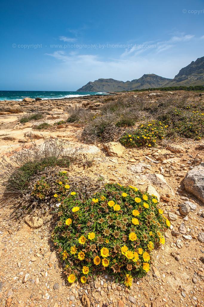 Cala des Camps Mallorca-8