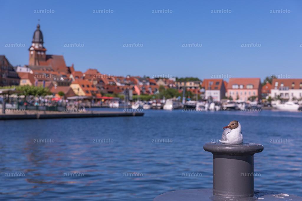 0-170709_1656-7954 | --Dateigröße 6720 x 4480 Pixel-- Satdthafen von Waren mit Möwe auf Poller