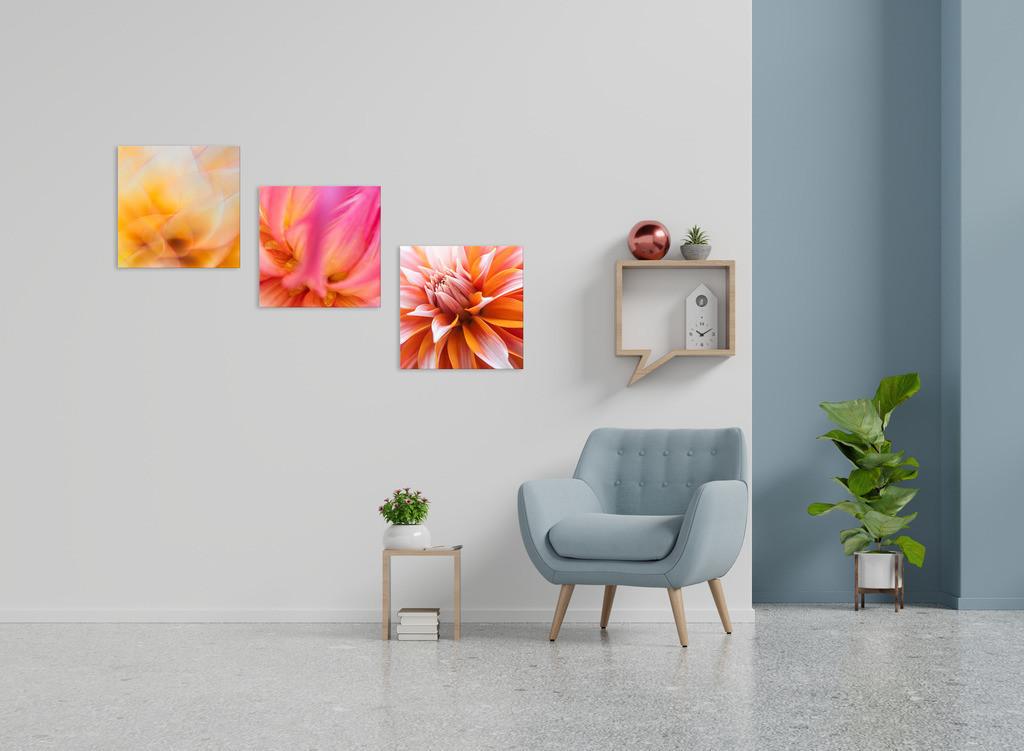 Blütentrio zur Wandgestaltung | Anwendungsbeispiel für die Gestaltung Ihres Wohnbereichs mit mehreren Bildern. Sie finden diese Motive in den Galerien Farben und Formen - Blütenpracht, Farbstimmungen und Pflanzen abstrakt
