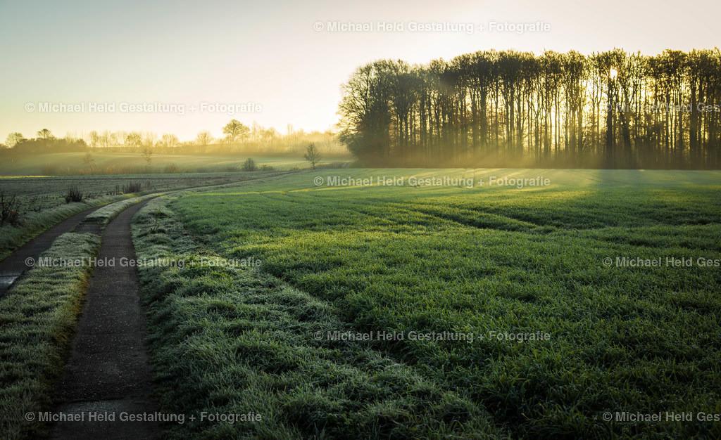 Sonnenaufgang am Wald | Die Morgensonne bricht durch den Wald
