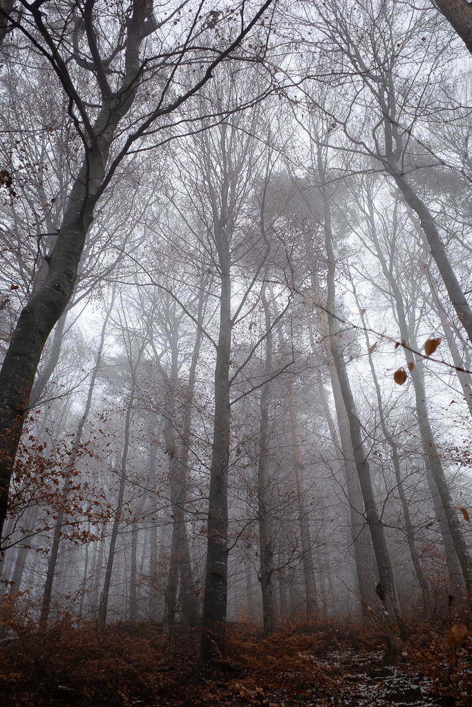 Forrest in the fog (II)