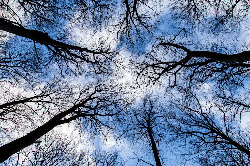 JT-161226-058 | Baumkronen, Buchenwald, ohne Blätter im Winter,