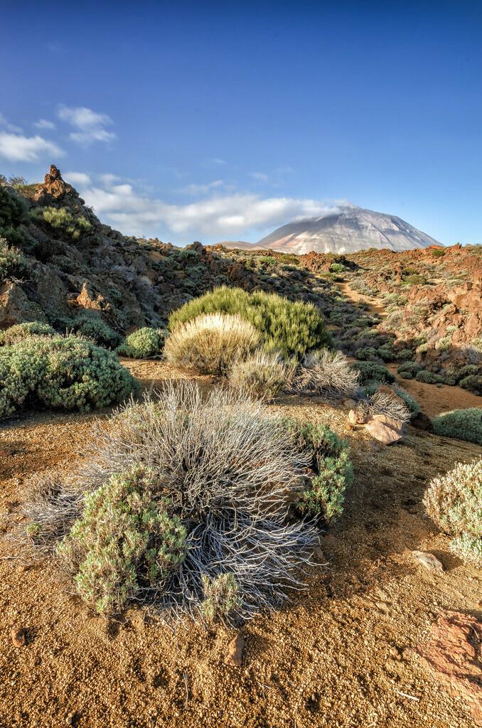 Die Hochebene des Teide