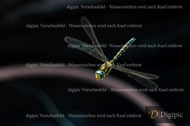 Libelle1 - Vorschaubild | Libelle im Flug