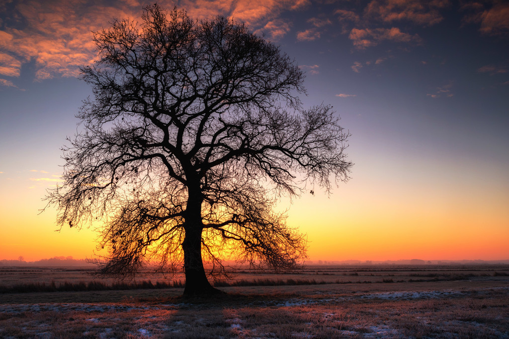 Silhouette | Morgens bei Sonnenaufgang in den Hammewiesen.