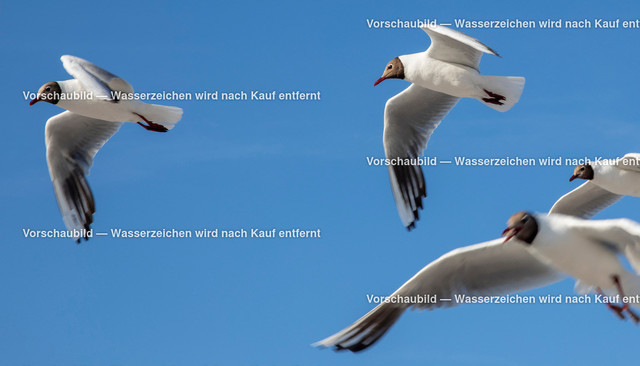 Tiere 3 Möwen am blauen Himmel | Möwen am blauen Himmel