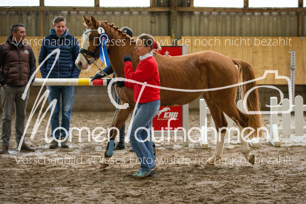 Freispringen-Pony-3j-53