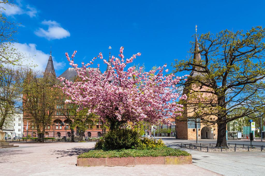 Das Steintor und das Ständehaus in der Hansestadt Rostock im Frühling | Das Steintor und das Ständehaus in der Hansestadt Rostock im Frühling.
