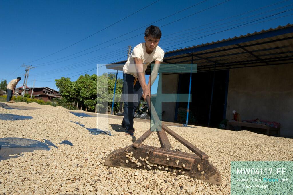 MW04117-FF | Laos | Paksong | Reportage: Kaffeeproduktion in Laos | Gewaschene Kaffeebohnen werden in der Sonne getrocknet und mehrmals gewendet. In den Plantagen auf dem Bolaven-Plateau gedeihen Sträucher der Kaffeesorten Robusta und Arabica.  ** Feindaten bitte anfragen bei Mario Weigt Photography, info@asia-stories.com **