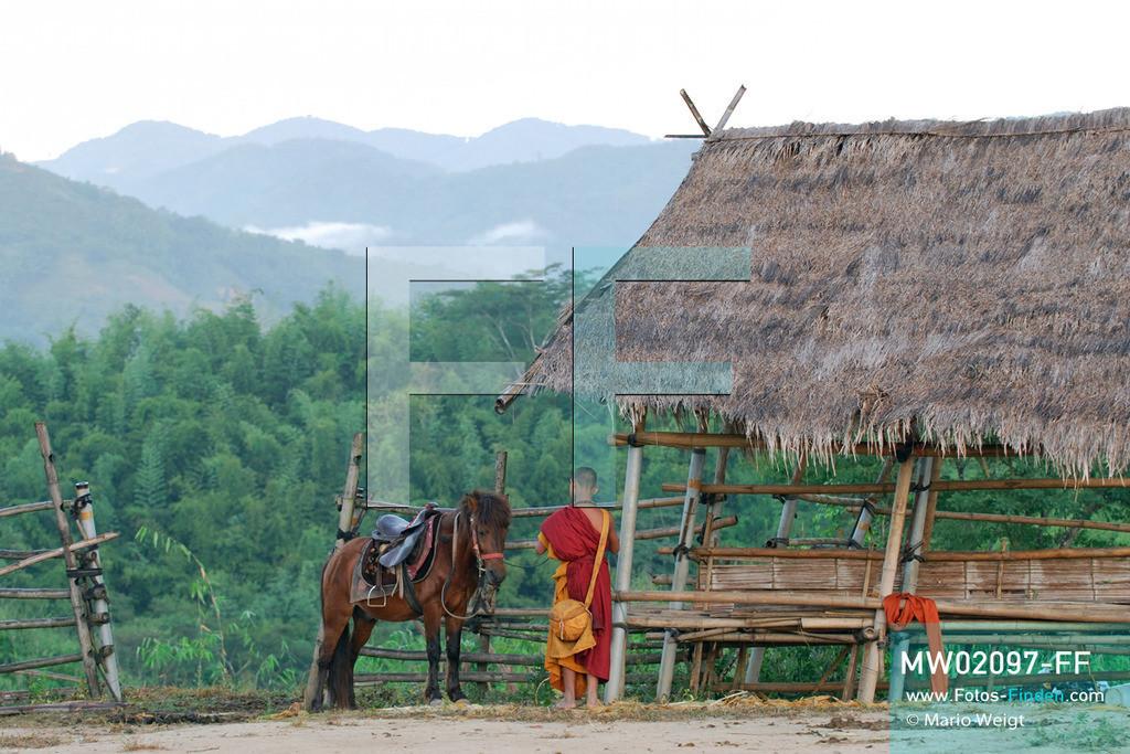 MW02097-FF | Thailand | Goldenes Dreieck | Reportage: Buddhas Ranch im Dschungel | Der junge Mönch Pansaen auf der Pferdekoppel  ** Feindaten bitte anfragen bei Mario Weigt Photography, info@asia-stories.com **