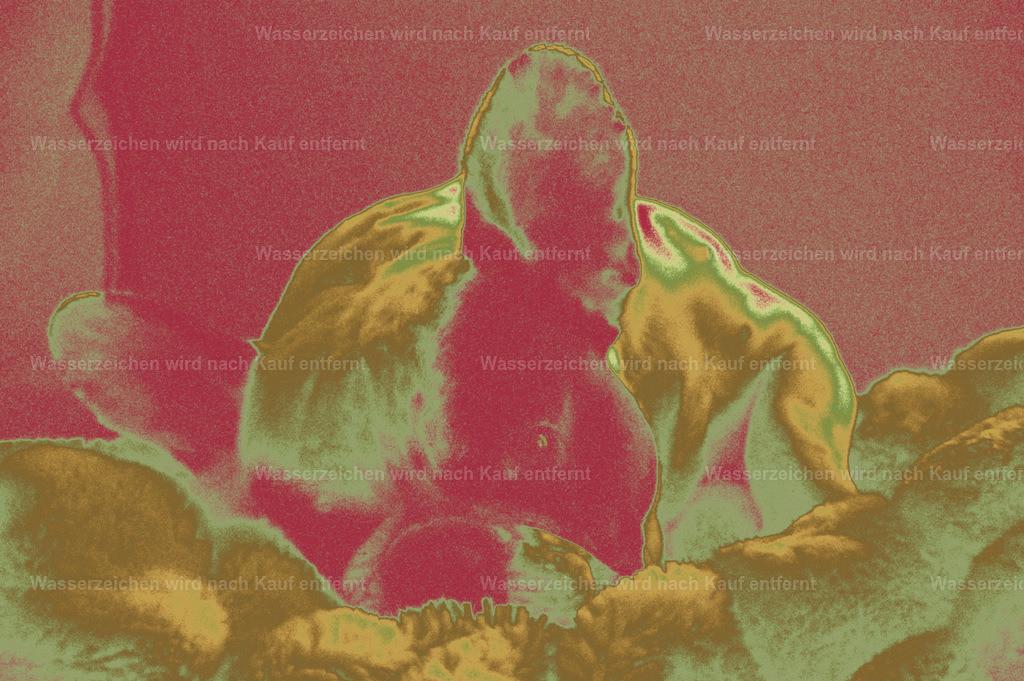 Französische Bulldogge   Coloriertes Kunstwerk, Französische Bulldogge, Photokunst, Kunstwerk, wallpaper, art