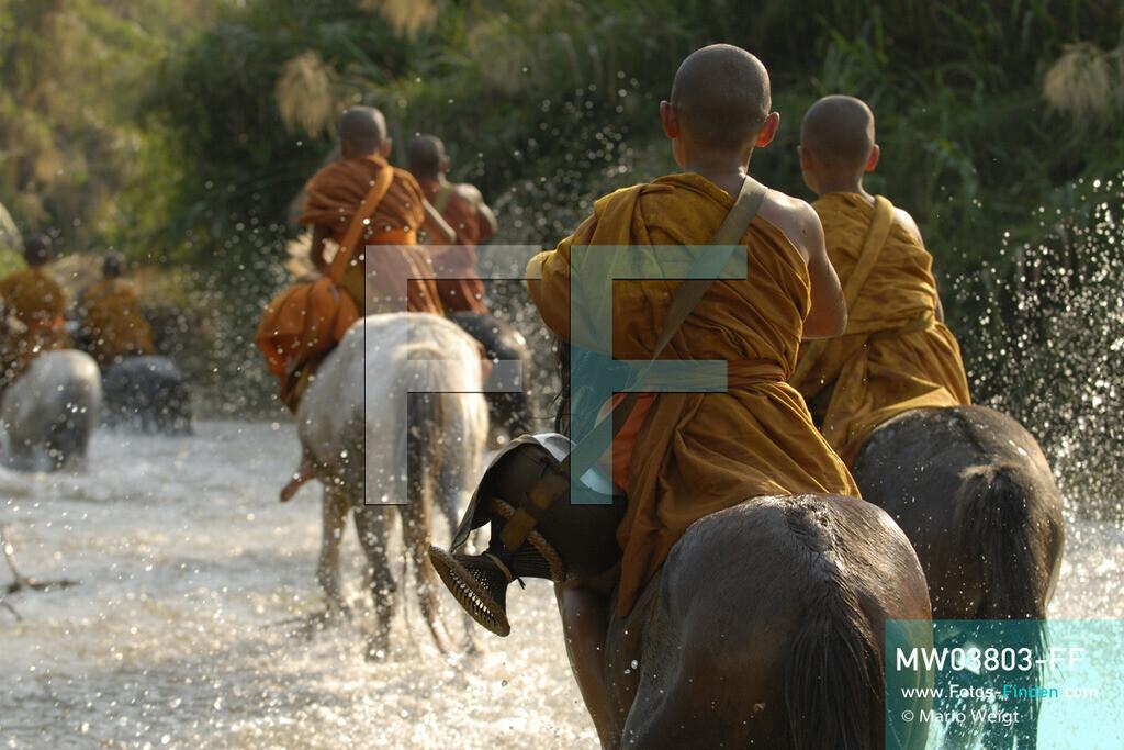 MW03803-FF | Thailand | Goldenes Dreieck | Reportage: Buddhas Ranch im Dschungel | Die jungen Mönche reiten auf ihren Pferden durch den Fluss.  ** Feindaten bitte anfragen bei Mario Weigt Photography, info@asia-stories.com **