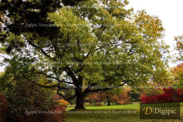 Baum 1-Vorschaubild