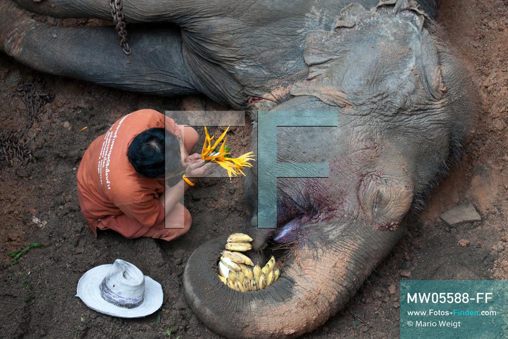 MW05588-FF | Thailand | Lampang | Reportage: Krankenhaus für Elefanten | Abschiedsgebet für die verstorbene Elefantenkuh Tan Thong. Sie ist 78 Jahre geworden.  ** Feindaten bitte anfragen bei Mario Weigt Photography, info@asia-stories.com **