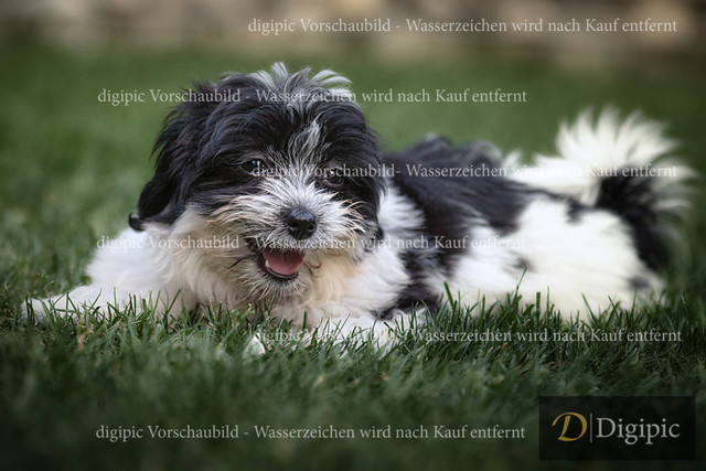IMGL2904 | Hundewelpe Originalgröße: 4693x3129px