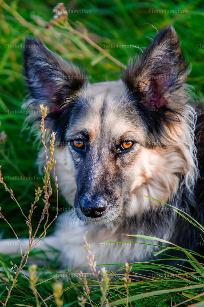Strassenhunde-x7