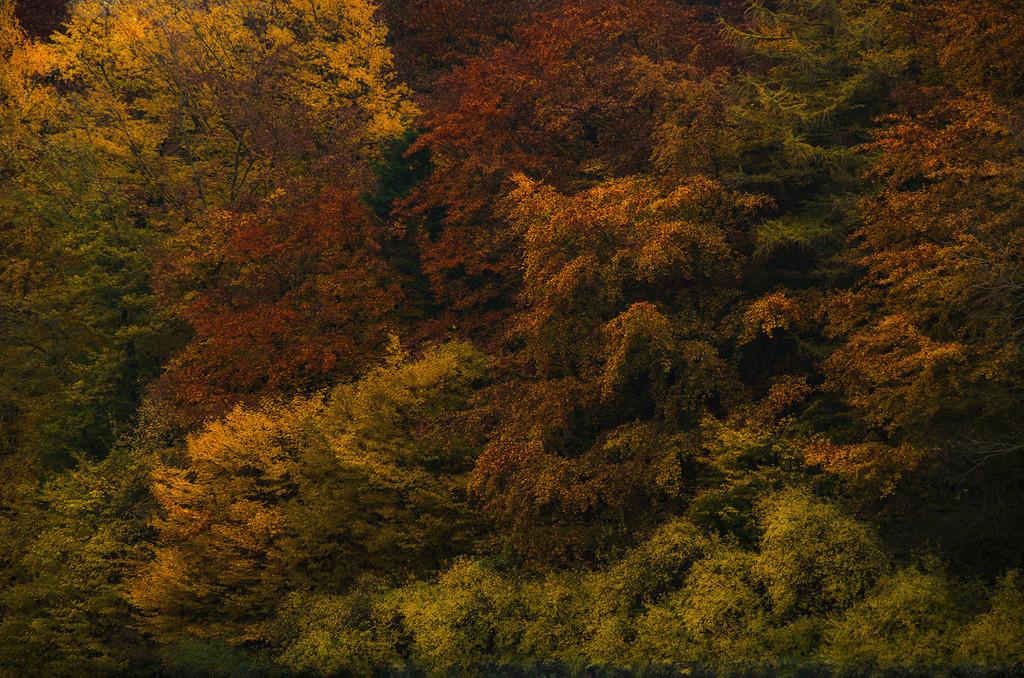 Herbsttöne | Bäume in verschiedenen Färbungen