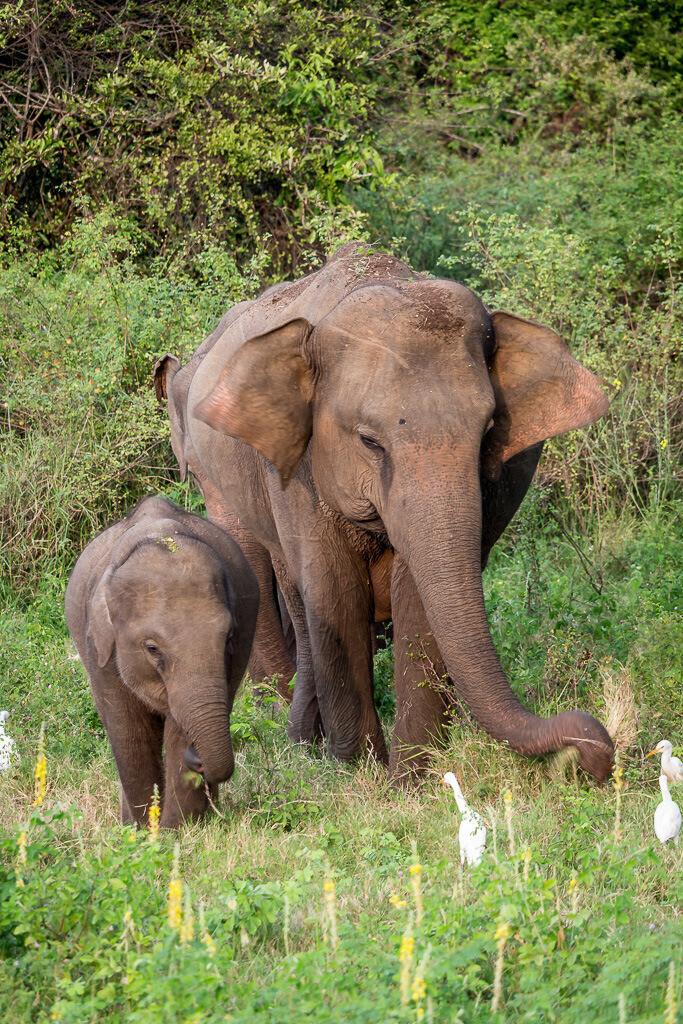 Elefant mit ihrem Baby beim Grasen