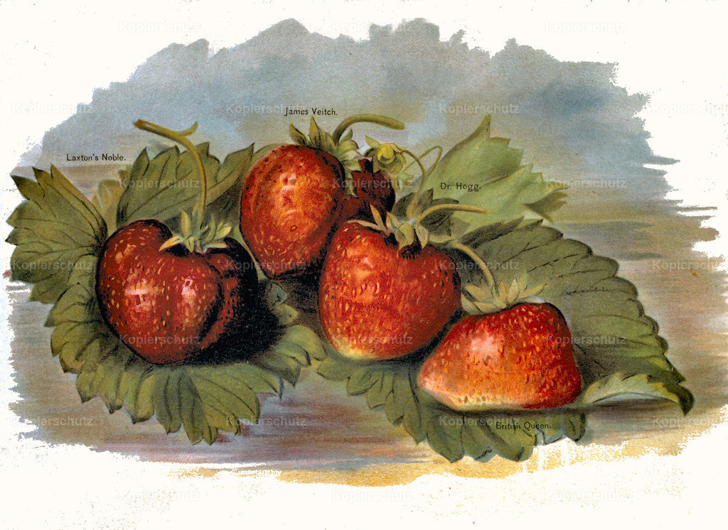 Fruit-Growers-Guide-1890-May-Rivers-Obst-Früchte (41)