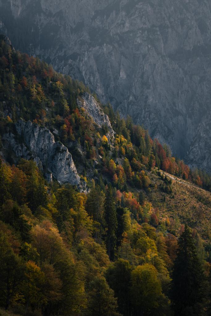 Bergwald | Nationalpark Gesäuse