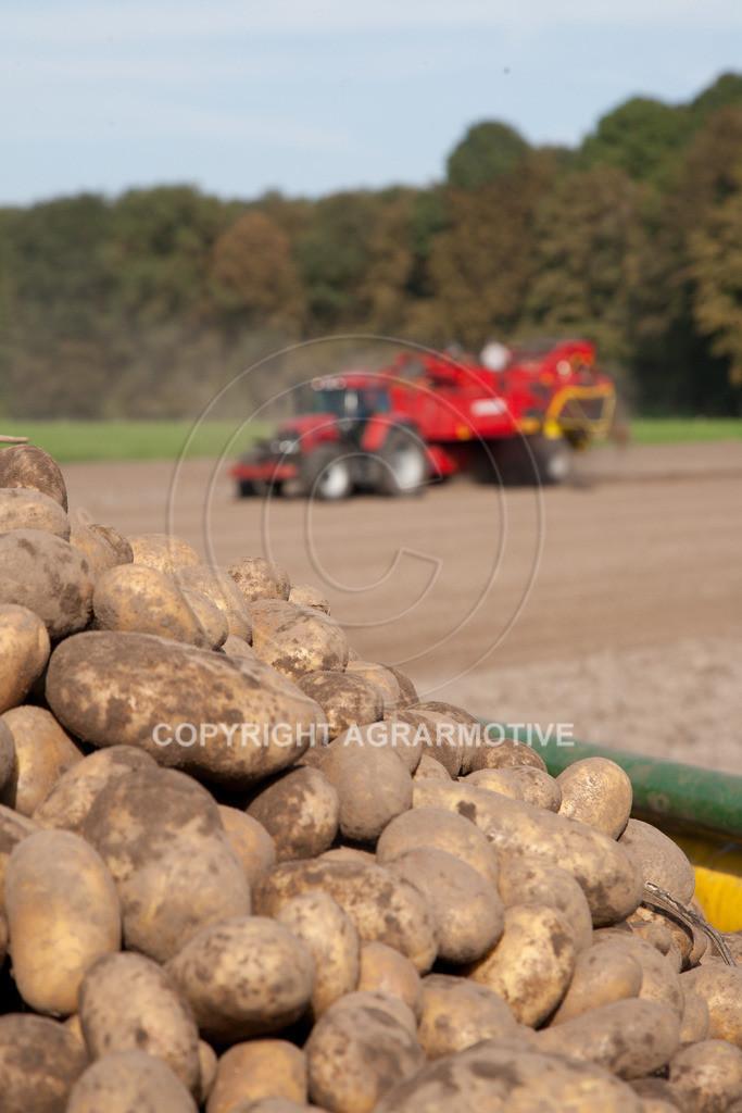 20110929-IMG_5954 | Ernte auf einem Kartoffelfeld - AGRARBILDER