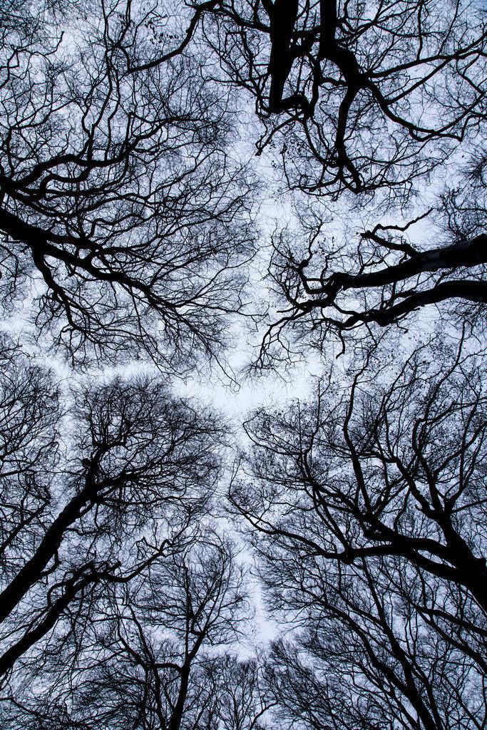 JT-161226-031 | Baumkronen, Buchenwald, ohne Blätter im Winter,