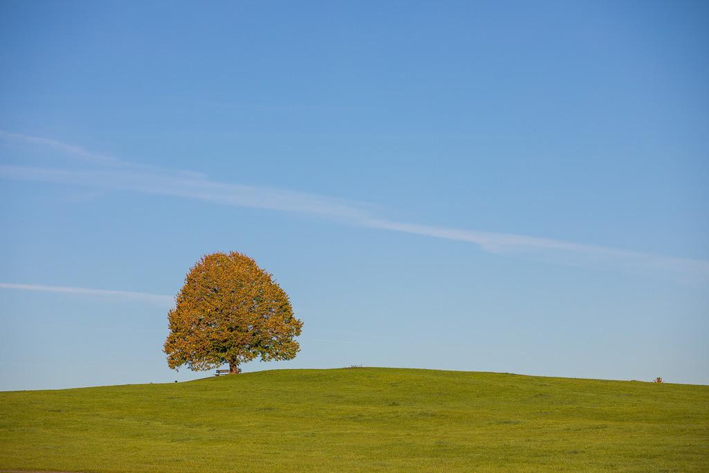 Herbstlich steht er da, der Baum