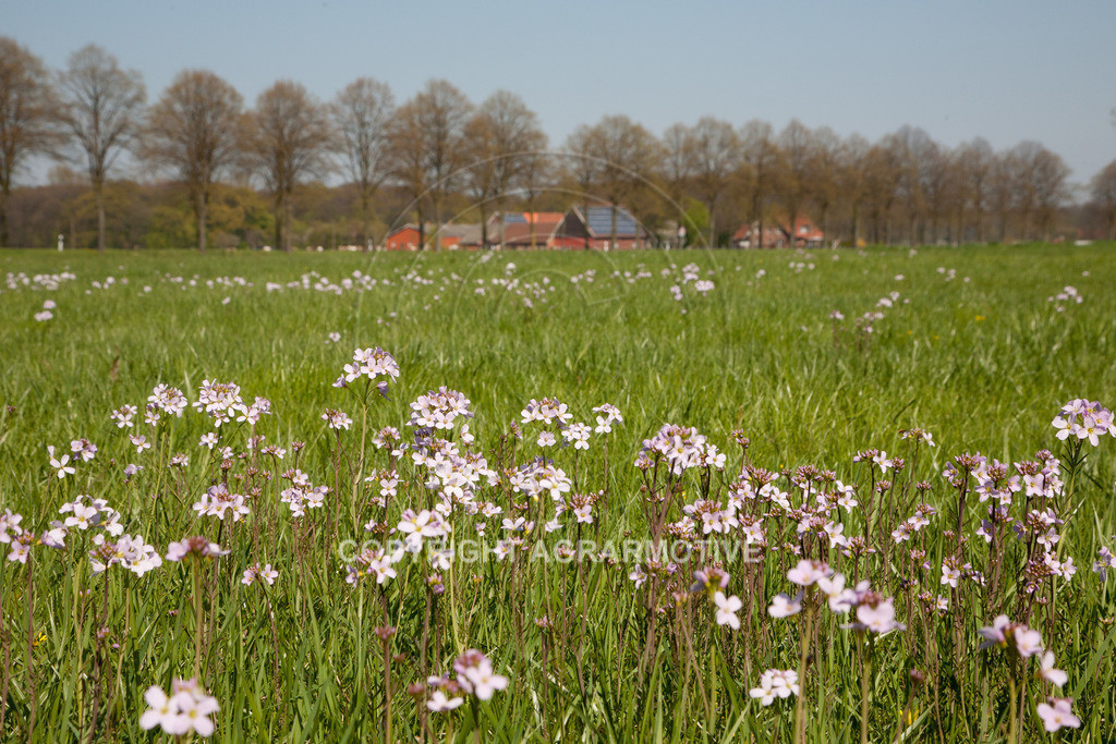 20100423-IMG_5709   blühende Frühlingswiese - AGRARMOTIVE Bildagentur