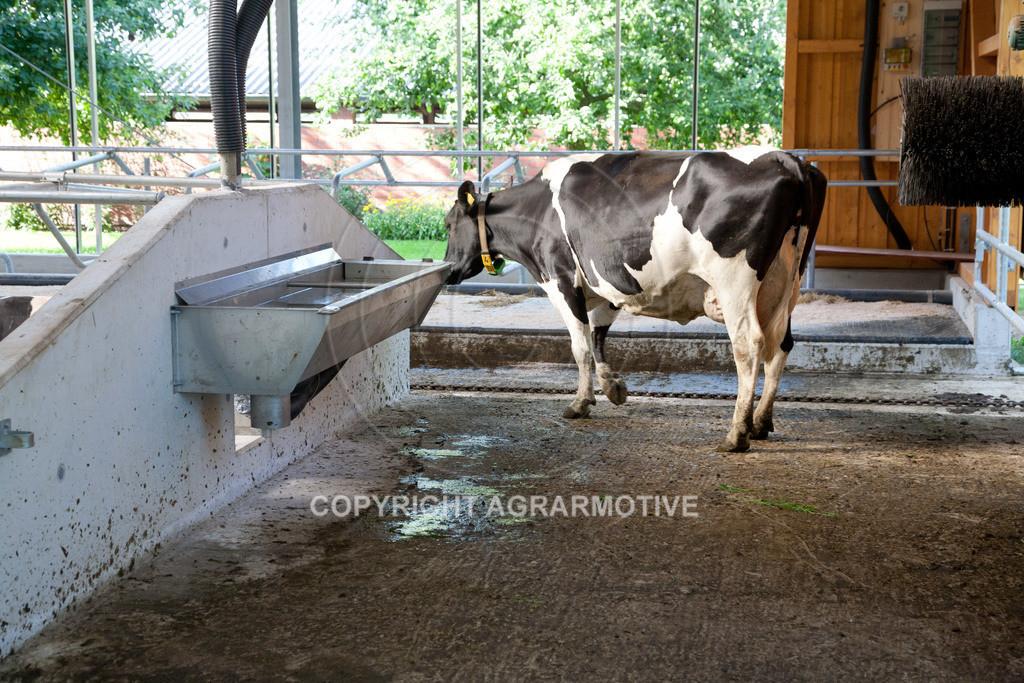 20110627-IMG_3051 | Milchkühe im Boxenlaufstall