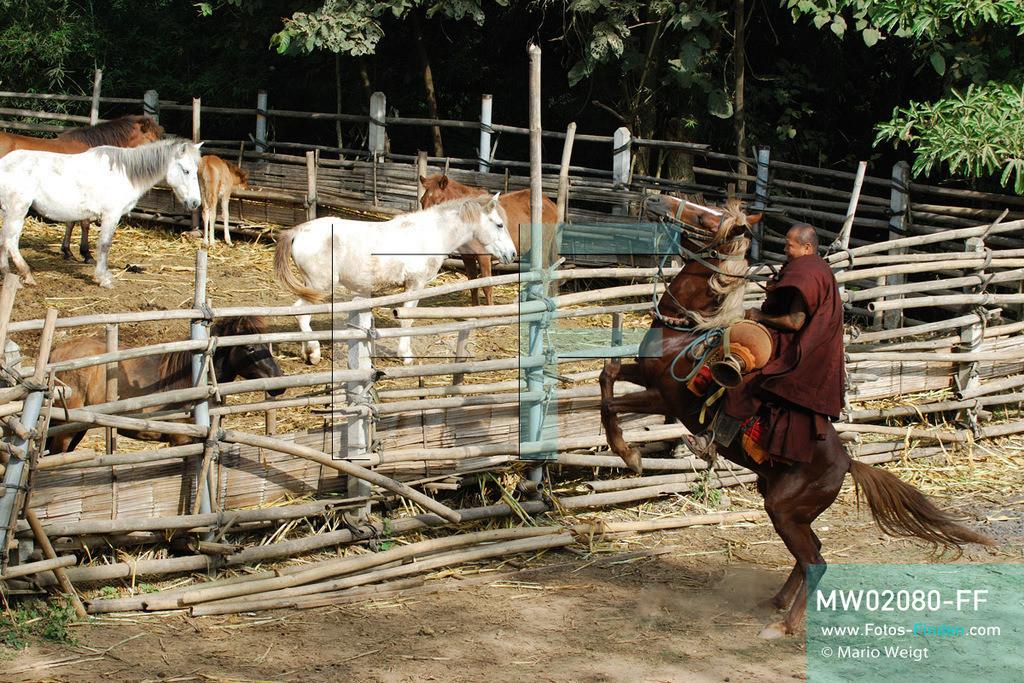 MW02080-FF | Thailand | Goldenes Dreieck | Reportage: Buddhas Ranch im Dschungel | Abt Phra Khru Bah Nuachai Kosito auf seinem Pferd  ** Feindaten bitte anfragen bei Mario Weigt Photography, info@asia-stories.com **