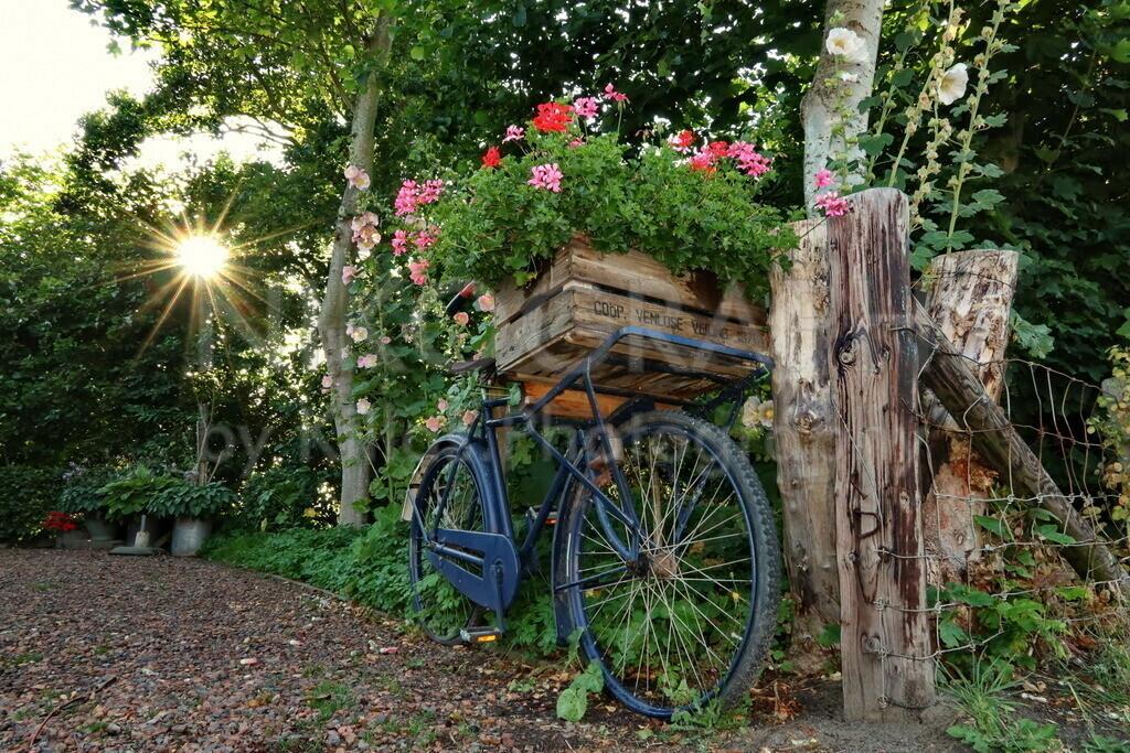 Fahrradkunst | Im Künstlerdorf De Waal, ist die Kunst allgegenwärtig. Das Lastenfahrrad wurde im Vorgarten mit einem Transportkorb voller Blumen arrangiert. Die Sonne strahlt durch den Grünbewuchs im Hintergrund und gibt der Szenerie einen besonderen Charme. De Waal ist das kleinste Dorf der Insel Texel. De Waal besticht durch die Architektur der Häuser. Die gemütliche Atmosphäre in De Waal lädt zum Verweilen ein und bietet Entschleunigung pur.