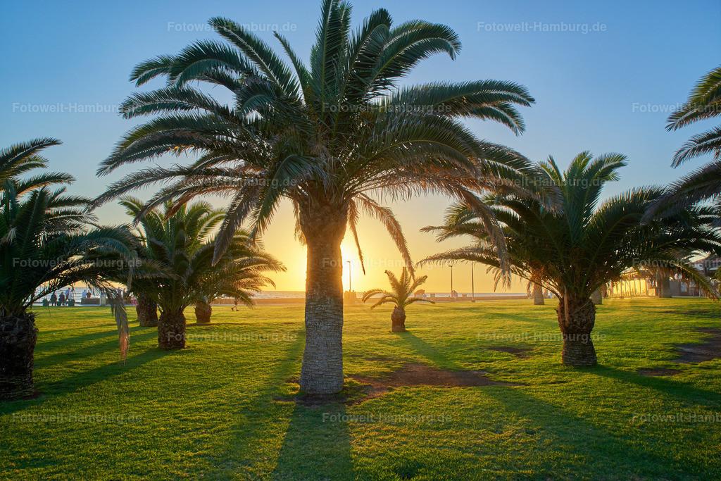 Palmen in Meloneras