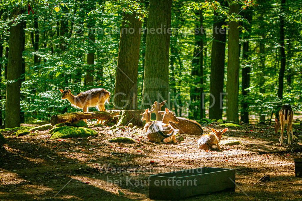 Wildpark-Kaiserslautern_20210918_0782