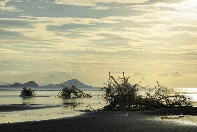 Baumwurzeln am Strand | Große Baumwurzeln liegen malerisch am Strand bei Niedrigwasser, im Hintergrund eine Bergkette, Abendlicht, Spiegelungen - Location: Indonesien, Insel Flores