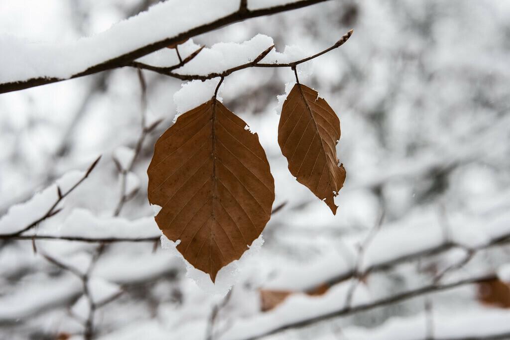 Spandau-eingeschneit (28 von 28)