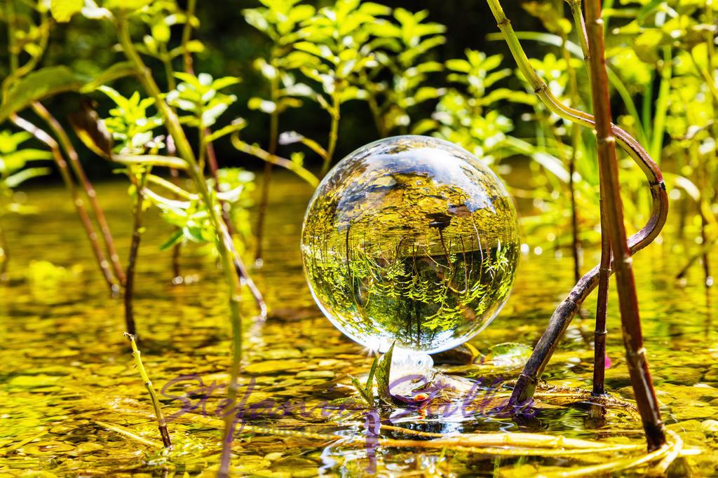 Lakeforest / See-Wald   Lensball placed in the middle of small lake plants / Lensball der in die Mitte von kleinen Wasserpflanzen plaziert wurde