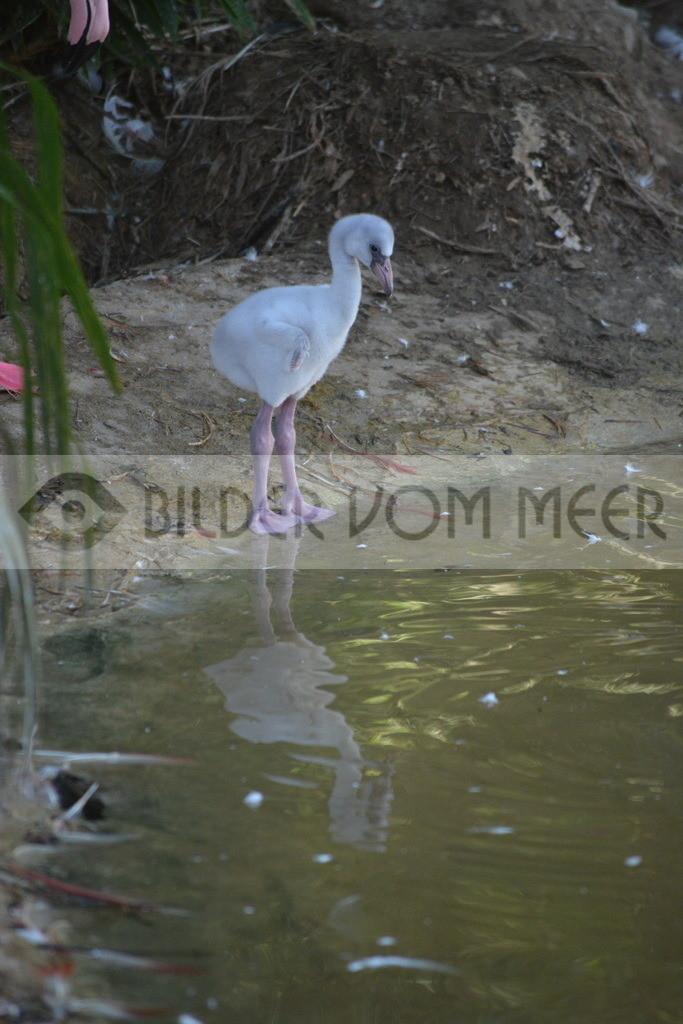Flamingo Bilder Baby | Rosa Flamingo Baby Bilder