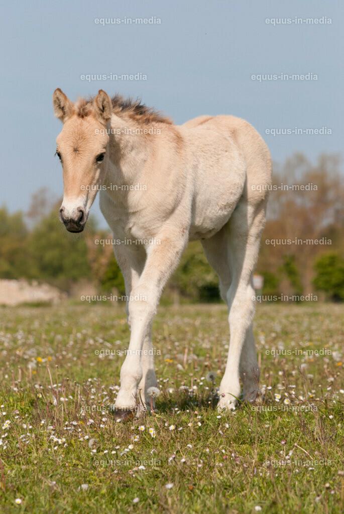 20100514-DSC_2279 | Henson Pferd Fohlen auf der Weide