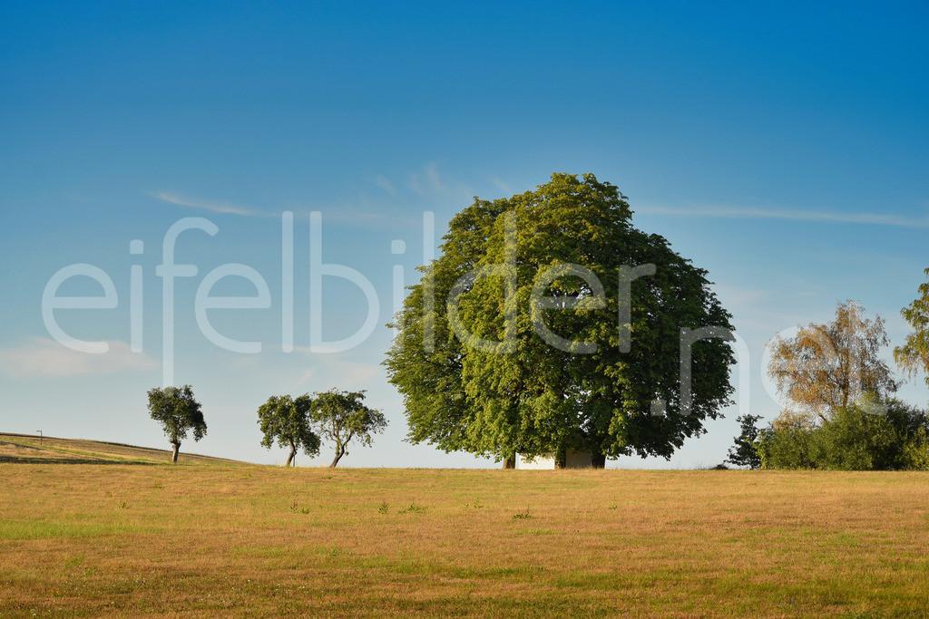 Landschaft bei Bad Bertrich | Bad Bertrich, Ortsteil Kennfus