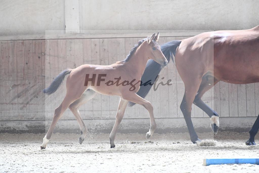 Kat-Nr. 11 HF Benicio_Thalhauser-Andersen_3221058