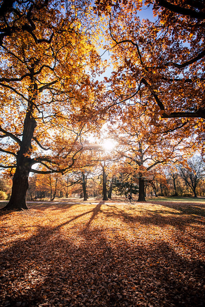 Clarapark Herbst