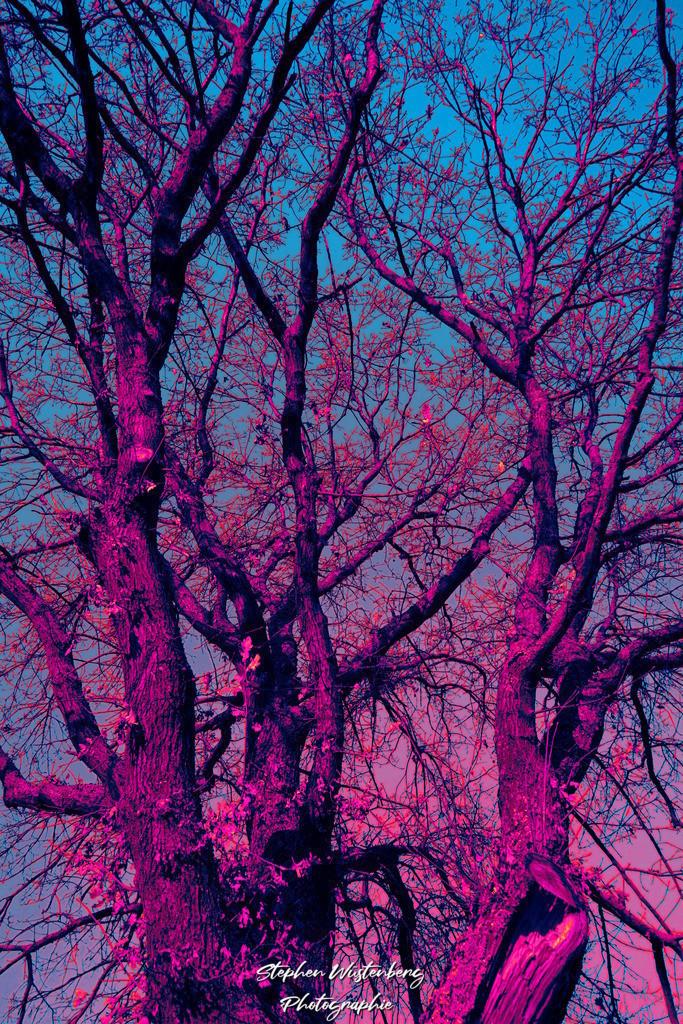 Falschfarbenbaum  | Baumgeäst in psychedelischen Farben