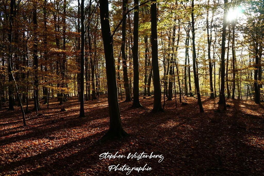 Tiefstehende Herbstsonne im Wald | Tiefstehende Herbstsonne mit herrlichem Strahlen- und Schattenwurf in einem Wäldchen bei Leithöfe