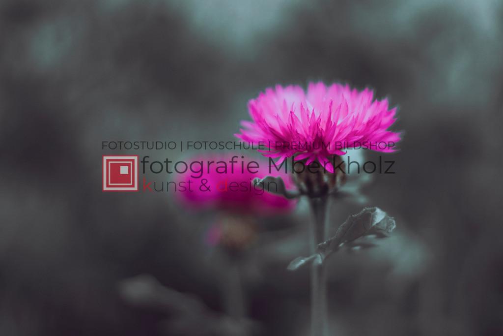 @rainer_schau_mberkholz_Natur_Blumen_MGL2337_2