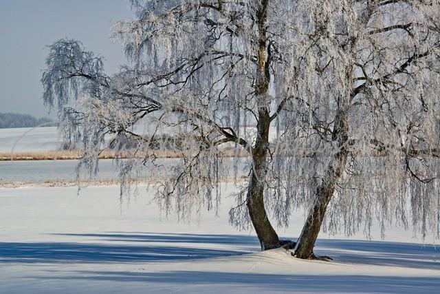 1030776_Baum_Winter_JMW_300