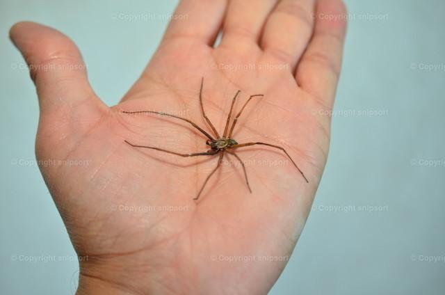 Spinne auf der Handfläche | Eine Spinne auf der Hand zur Überwindung der Angst