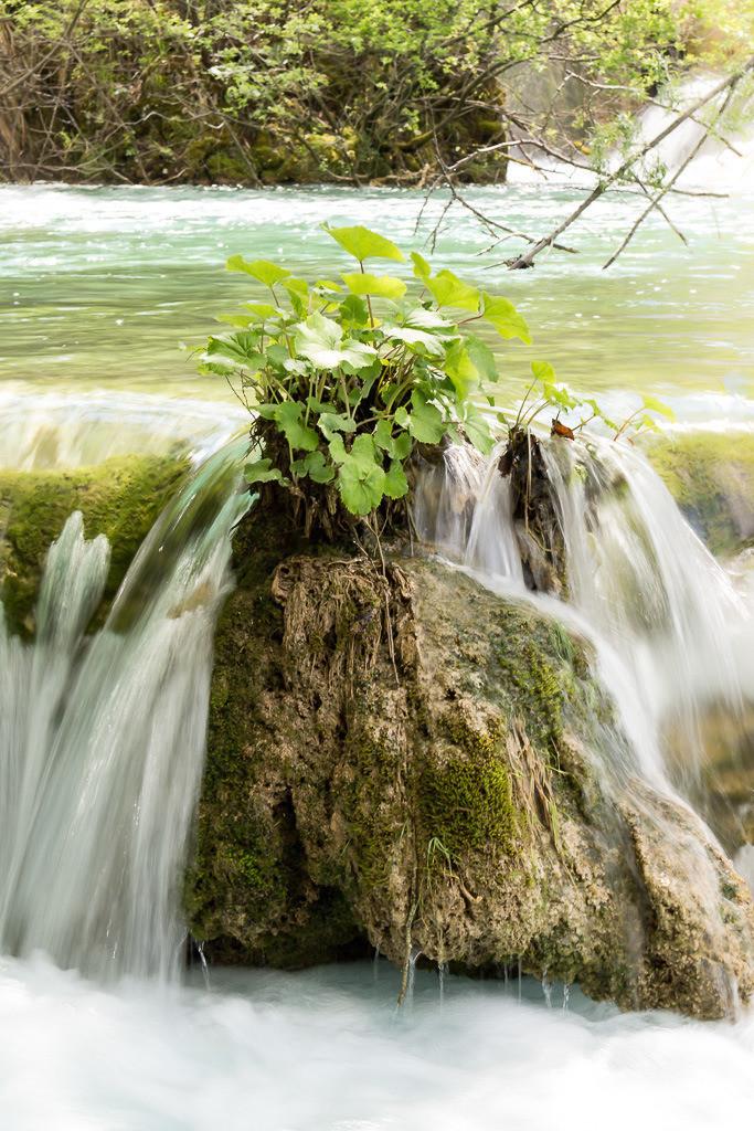 Pflanze im Wasser