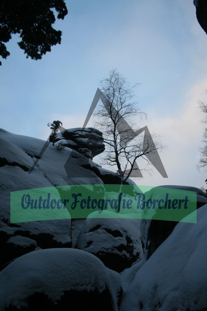 IMG_4814 | kahler Baum im Winter, Sächische Schweiz